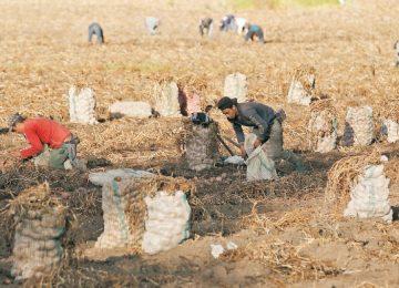 16nego not aprph01 1521145832 360x260 - ¿Por qué es importante la agricultura familiar?