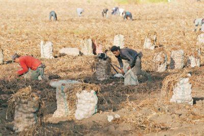 16nego not aprph01 1521145832 - ¿Por qué es importante la agricultura familiar?