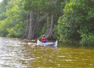 26abril biboph01 1524687008 360x260 - La selva ignorada de Colombia que puede frenar el cambio climático