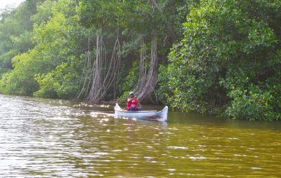 26abril biboph01 1524687008 - La selva ignorada de Colombia que puede frenar el cambio climático