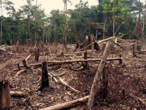 deforestation in the amazon.jpg.662x0 q100 crop scale 300x225 - Corte Suprema, al rescate de la Amazonía