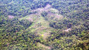 5a1bfc920cf01 300x169 - La ley de la selva