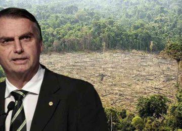 586195 1 360x260 - Bolsonaro: ¿un riesgo para el medio ambiente colombiano?