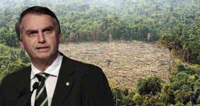 586195 1 - Bolsonaro: ¿un riesgo para el medio ambiente colombiano?