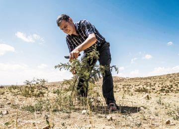 10diciembre vivir1ph01 1544389187 360x260 - El hombre que hizo florecer el desierto