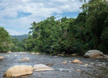36790 1 360x260 - El deporte de la tala de bosques