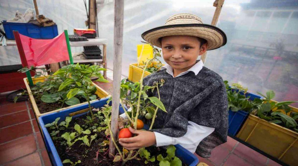 42753 1 1024x572 - La huerta donde los niños cultivan su amor por el medio ambiente