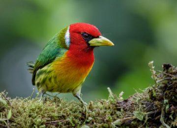 5bb387fbb21f3 360x260 - Pegáte la voladita: Feria Internacional de Aves de Colombia, Cali, 13 a 17 de febrero