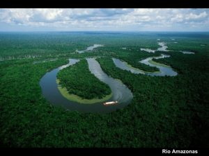 el valor del medio ambiente 15 728 300x225 - Celulares en la copa de los árboles: el exitoso plan peruano contra la deforestación