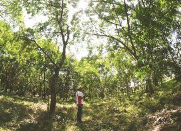 en pocharco recuperaron 10 hectareas de bosque seco 360x260 - Indígenas pijaos curan el bosque seco tropical