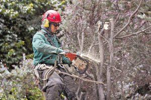 tala arboles   ee 0 300x200 - En pelea jurídica terminó la obra del parque Japón