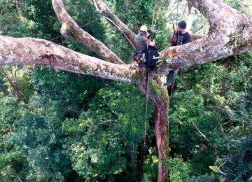 tuberculos andinos m 22 0 360x260 - Celulares en la copa de los árboles: el exitoso plan peruano contra la deforestación