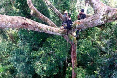 tuberculos andinos m 22 0 - Celulares en la copa de los árboles: el exitoso plan peruano contra la deforestación