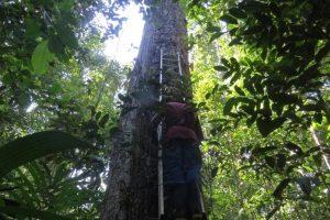 """tuberculos andinos m 7 1 300x200 - """"En las ciudades se deben sembrar árboles, no talarlos"""": director del jardín botánico de Londres"""