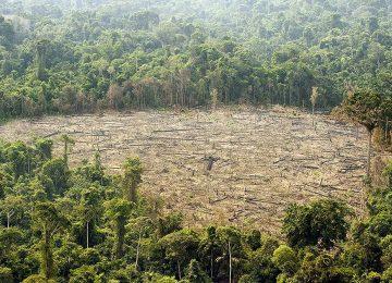 34164 12517 1 360x260 - Deforestación y Plan Nacional de Subdesarrollo