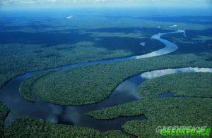 vista aerea del r o cuniua am 300x196 - El gran saqueo que amenaza al planeta