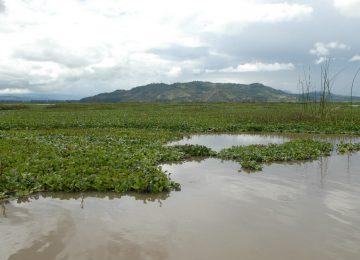 laguna 2 2 360x260 - Más de cinco mil millones se destinarán para recuperar la laguna de Fúquene