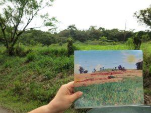 Amazonía deforestacion reforestacion bosques conservacion colombia 8 683x512 300x225 - BLANCO Y NEGRO: El último ataúd