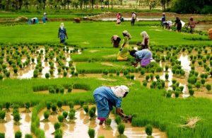 El impacto de la revolucion verde en el mundo actual.jpj  300x195 - Ha llegado la hora del 'realismo verde'
