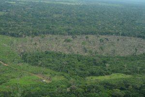"""dsc 7295 300x200 - Compromisos tras fallo que entregó derechos a la Amazonía """"no se traducen en acciones"""""""