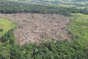 deforestación 696x464 300x200 - El 68 % de la Amazonia protegida está amenazada