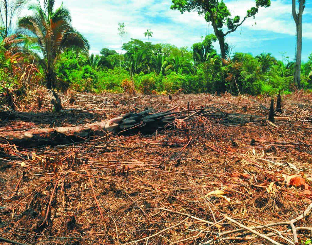 deforestacion herminso ruiz 17438831 1024x803 - La joven que viajó de Providencia al Amazonas por defender el bosque//El Tiempo//YouTube.//Deforestación,foto El Espectador.