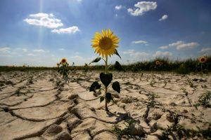 desertificacion 8fa97fb9 1500x1000 300x200 - La lucha de Argentina contra el cambio climático