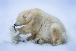 istock belovodchenko 300x200 - Canadá se declara en emergencia ambiental por el cambio climático