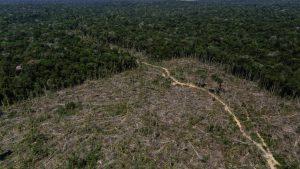 principal tala arboles 1 300x169 - Colombia en jaque por asesinatos de defensores del ecosistema