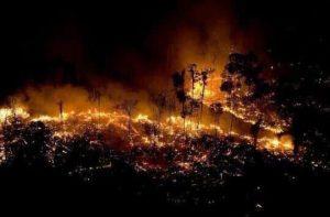 2aa1396f 169e 4979 9729 3ce94b62e288 300x197 - Las llamas devoran el 20% del oxígeno que le entrega al mundo la selva amazónica, y aniquilan fauna y flora.