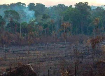 46530 1 360x260 - Incendios en el Amazonas: 5 datos que explican qué está en riesgo por los fuegos