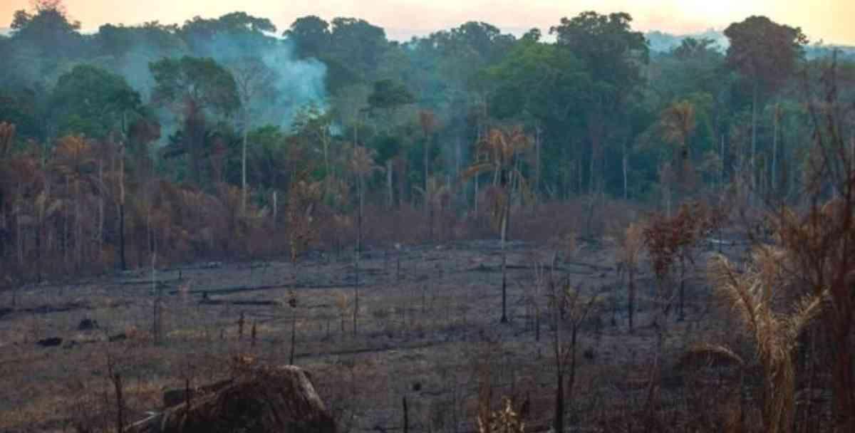 46530 1 - Incendios en el Amazonas: 5 datos que explican qué está en riesgo por los fuegos