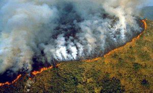50ab959d 2caa 4345 9977 0f1fac080e44 300x183 - Las llamas devoran el 20% del oxígeno que le entrega al mundo la selva amazónica, y aniquilan fauna y flora.