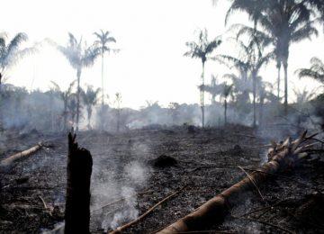 5d5d814fe3710 360x260 - ¿Hay relación entre la llegada al poder de Bolsonaro con incendios en la Amazonía?