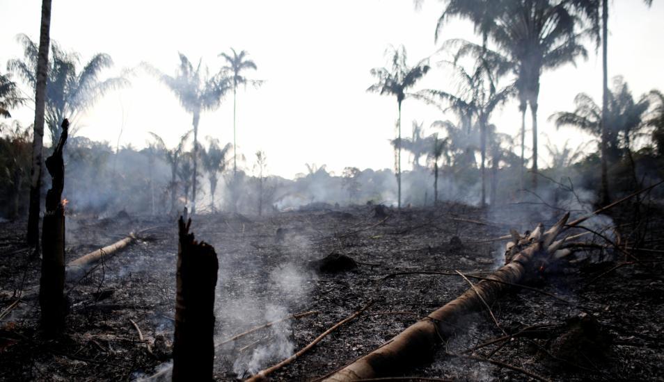 5d5d814fe3710 - ¿Hay relación entre la llegada al poder de Bolsonaro con incendios en la Amazonía?