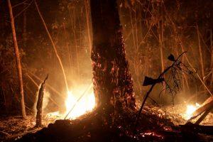 5d62b07672d2d 300x200 - Leonardo DiCaprio dona cinco millones de dólares para luchar contra incendios en el Amazonas