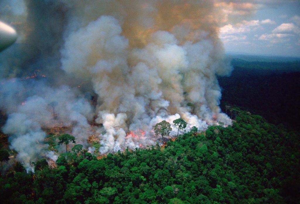 8e51ff0d 687b 48a2 949b a2340b82c055 1024x697 - ¡¡¡El Pulmón del Mundo, en emergencia!!!//BBC News//YouTube