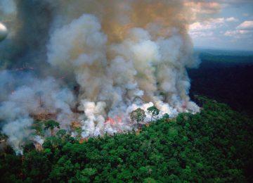 8e51ff0d 687b 48a2 949b a2340b82c055 360x260 - ¡¡¡El Pulmón del Mundo, en emergencia!!!//BBC News//YouTube