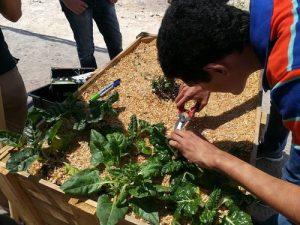 Redescubriendolosjardinesescolares1 300x225 - Redescubriendo los jardines escolares