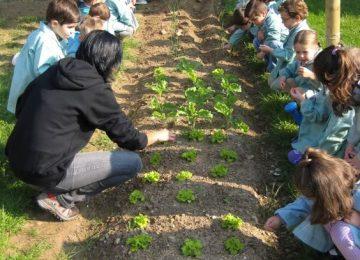 a3dea11f4c3856be0939604dd79a3713 360x260 - Redescubriendo los jardines escolares