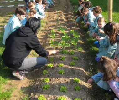 a3dea11f4c3856be0939604dd79a3713 380x320 - Redescubriendo los jardines escolares