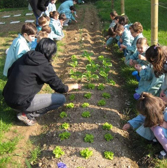a3dea11f4c3856be0939604dd79a3713 564x570 - Redescubriendo los jardines escolares