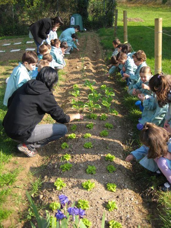 a3dea11f4c3856be0939604dd79a3713 - Redescubriendo los jardines escolares