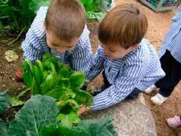 descarga 7 - Redescubriendo los jardines escolares