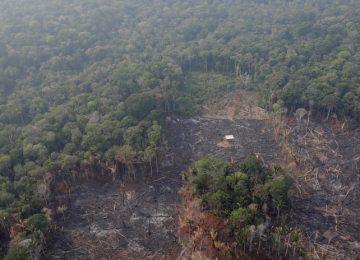 5d66cac108f3d907398b4578 360x260 - ¿Por qué se quema la Amazonia?
