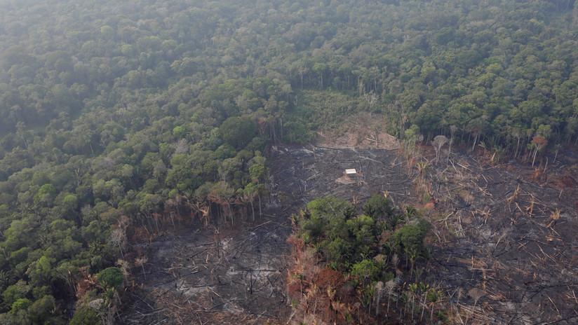 5d66cac108f3d907398b4578 - ¿Por qué se quema la Amazonia?