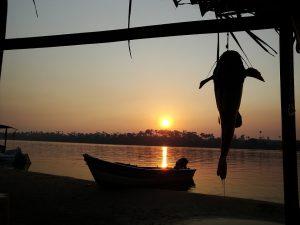 """by sunsets 2421476 960 720 300x225 - Los peces amazónicos enfrentan """"nuevas amenazas"""""""
