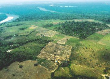 30 GENE NOT1ph02 20191029033542 360x260 - ¿Influyen los cultivos ilícitos en la deforestación de Colombia?