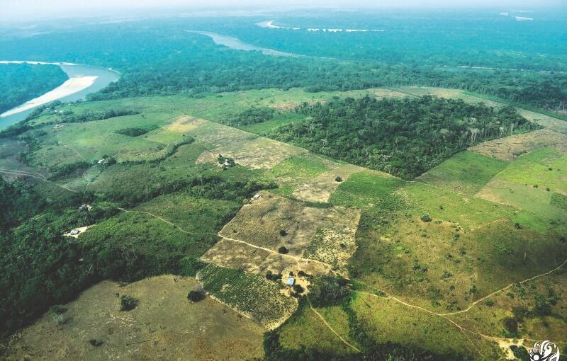 30 GENE NOT1ph02 20191029033542 - ¿Influyen los cultivos ilícitos en la deforestación de Colombia?