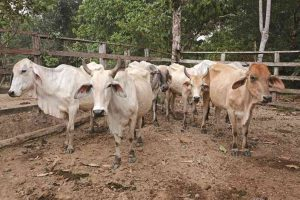 41799 1 300x200 - ¿Influyen los cultivos ilícitos en la deforestación de Colombia?